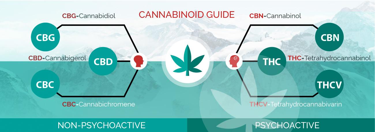 Cannabis - cần sa y tế : Cannabinoids là gì? 3