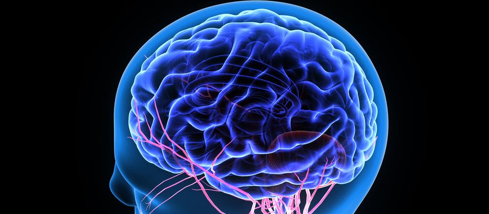 Receptor brain