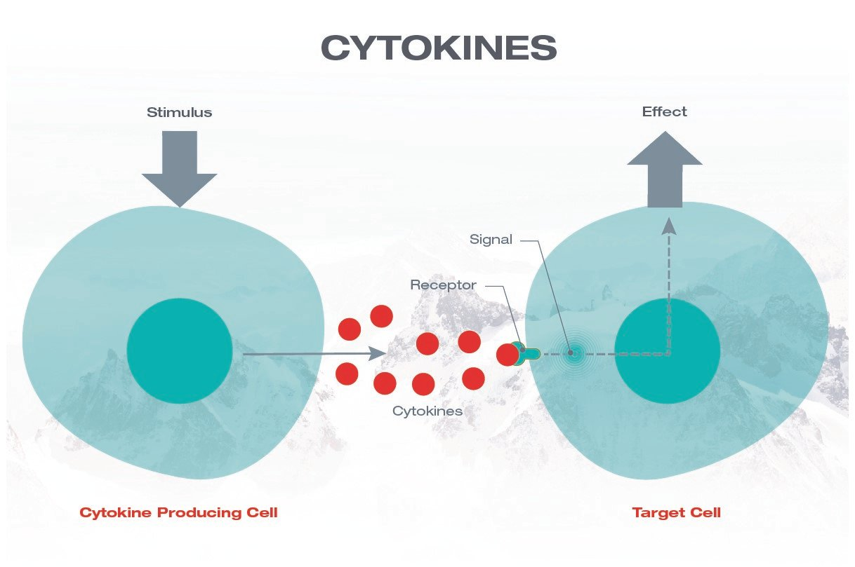 Basic mechanism of Cytokine