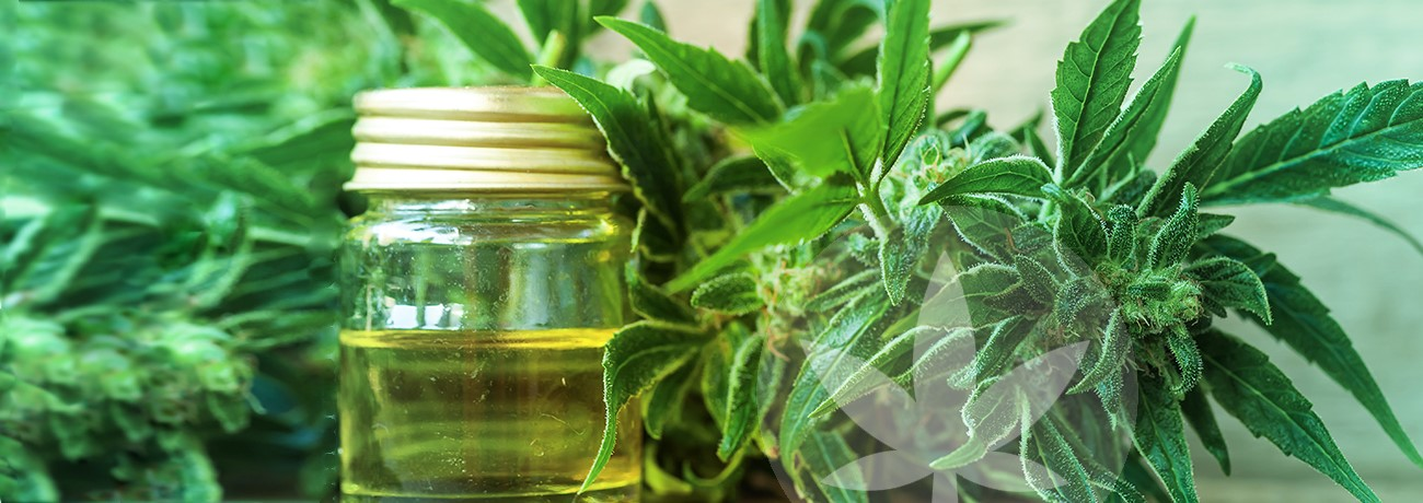 cannabis and oil in bottle