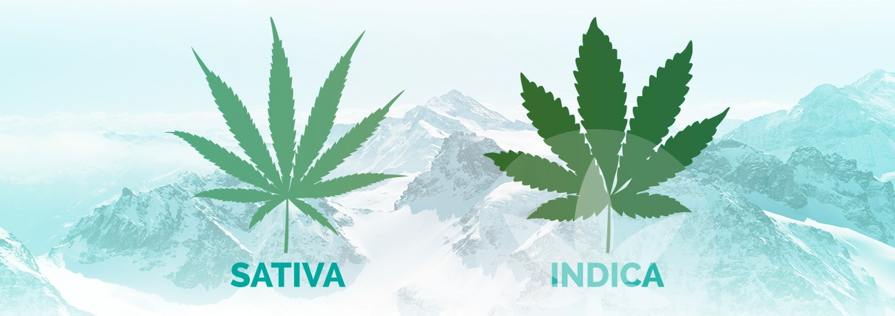 leaves of indica and sativa