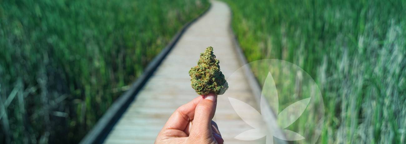 a cannabis bud and a road ahead