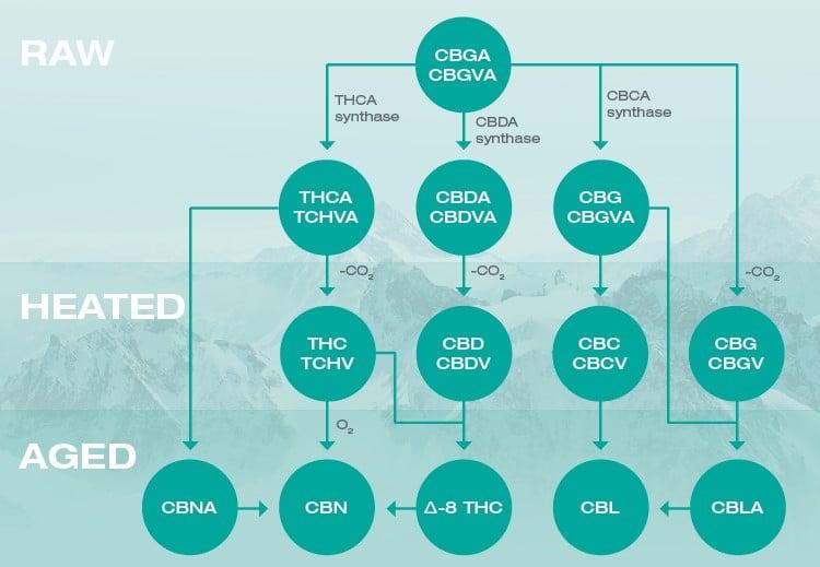 family tree of major cannabinoids