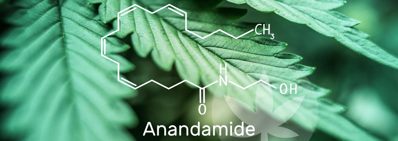 anandamite molecular structure