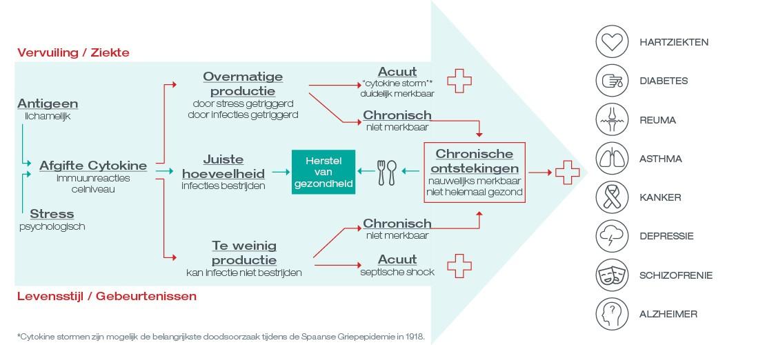 chronische inflammatie infographic