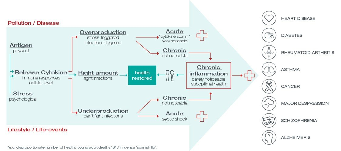 chronic inflammation infographic