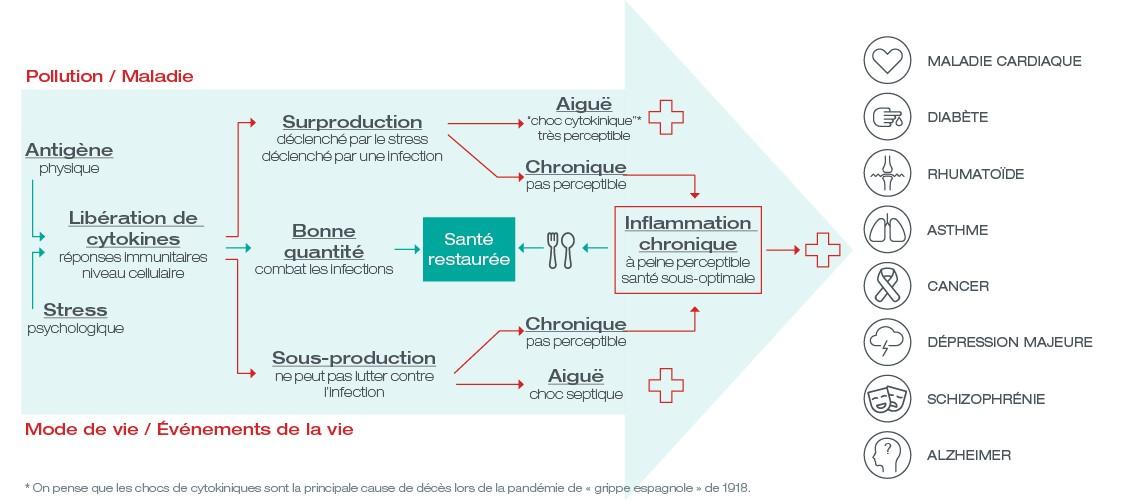 Infographie de l'inflammation chronique