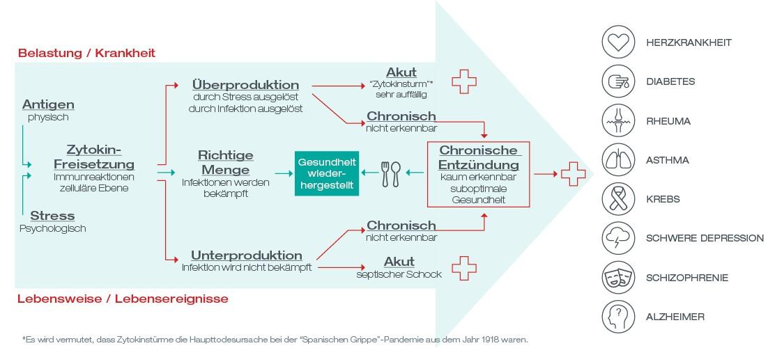chronische Entzündung Infografik