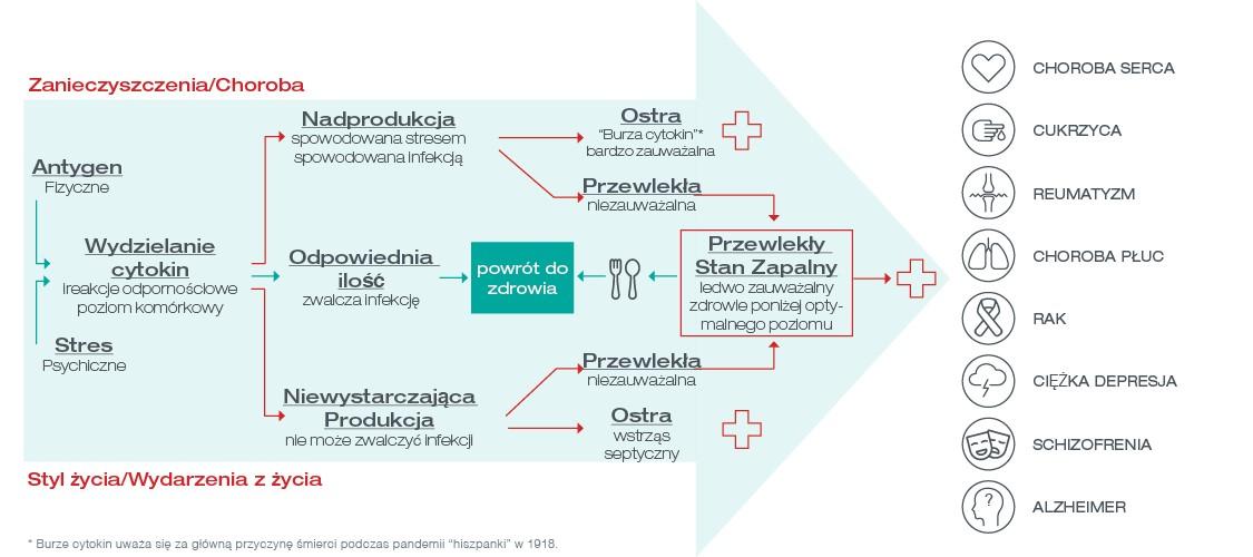 plansza infekcji przewlekłej