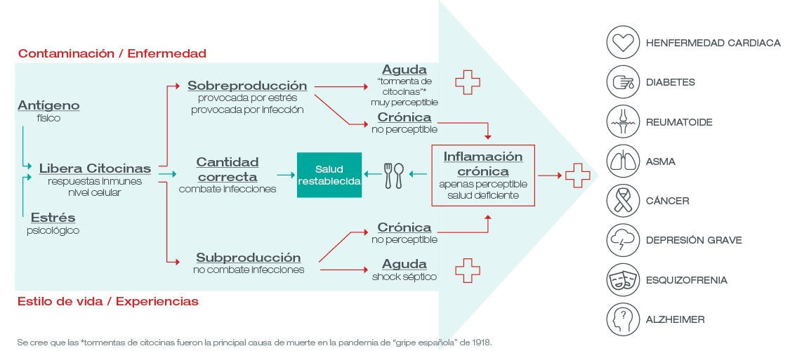 infografia de inflamacion cronica