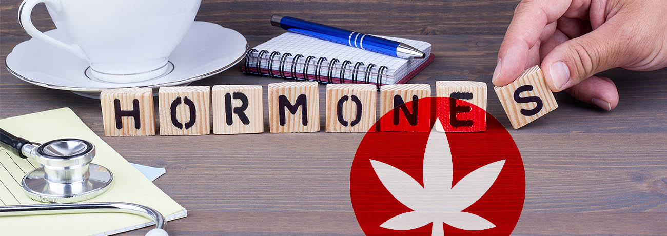 Does CBD Affect Your Hormones?