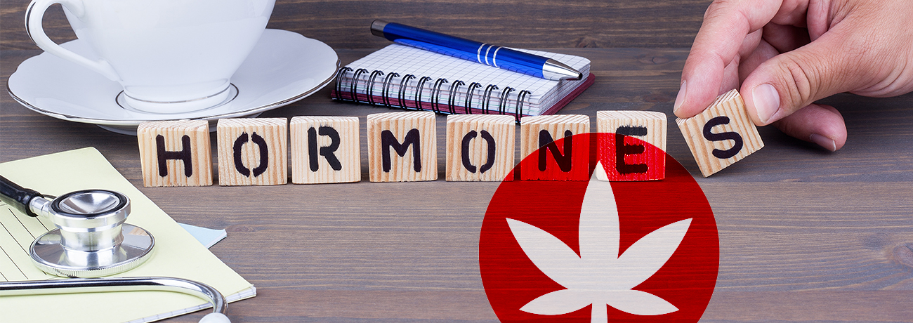 How does CBD affect your hormones? - Cibdol