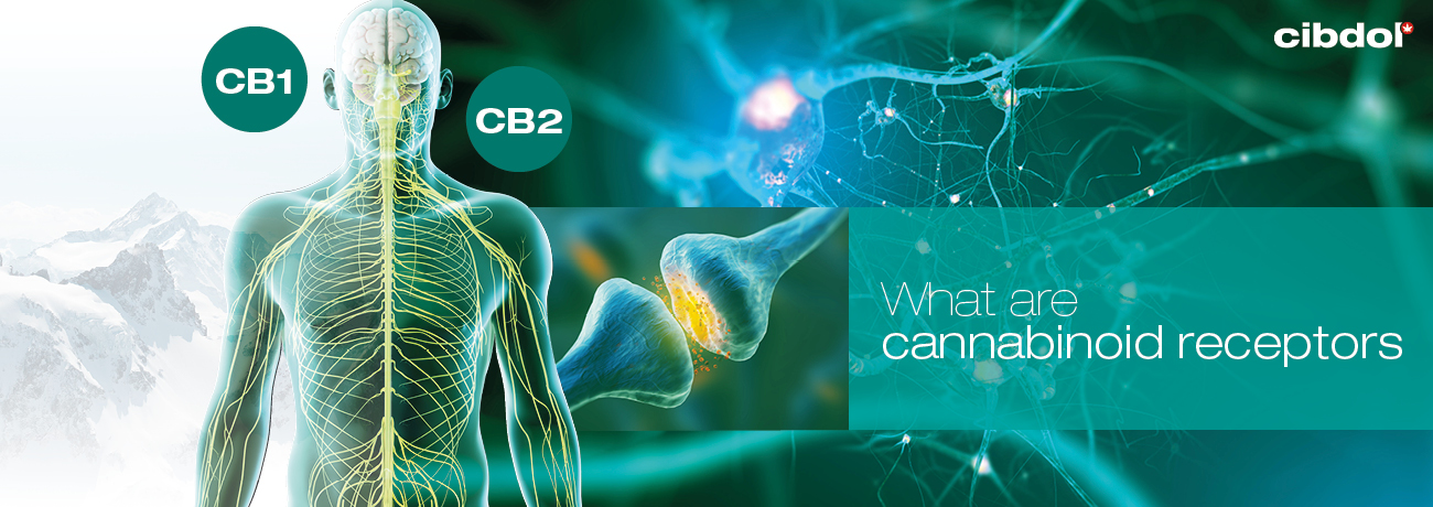 A Detailed Review Of Cannabinoid Receptors