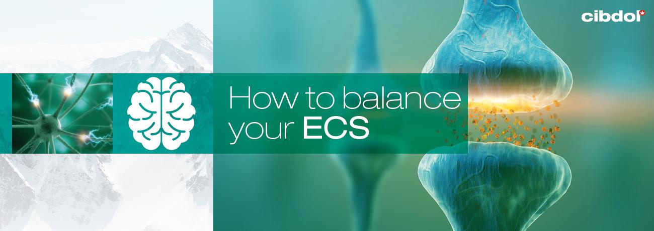 Comment équilibrer votre système endocannabinoïde