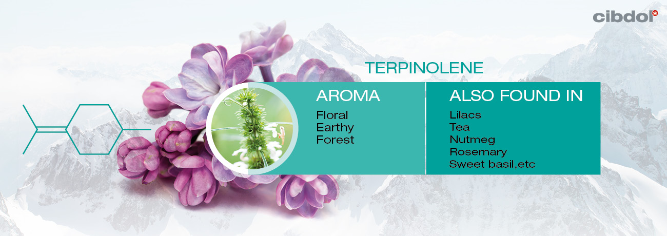 Hva er Terpineol ?