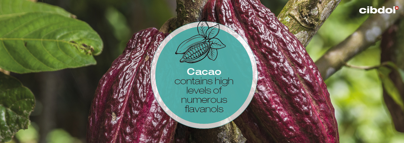 What are flavanols?