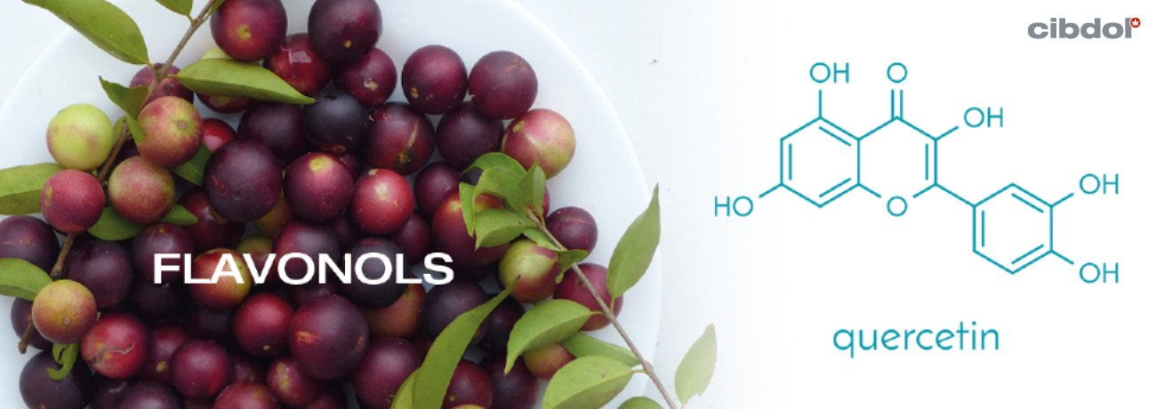 What are flavonols?