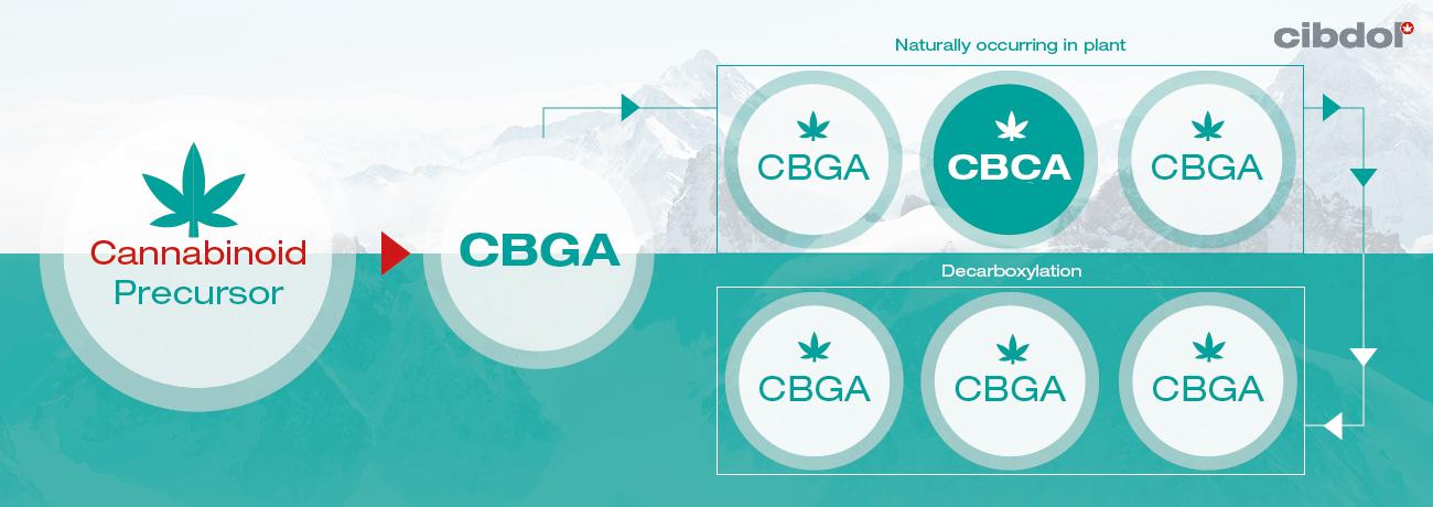 Hva er CBCA?