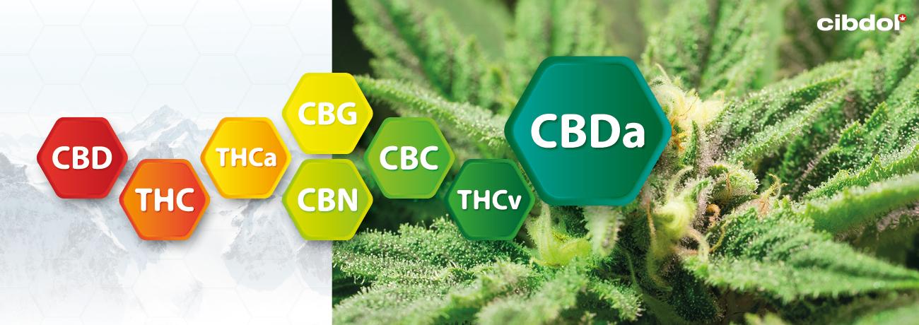 Mitä CBDA on?