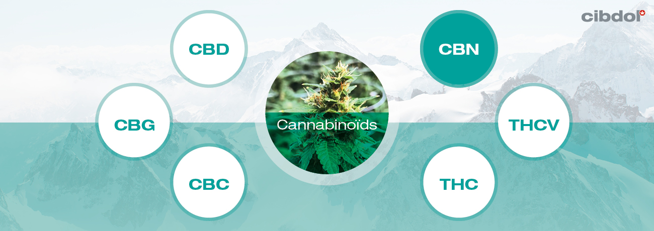 Wat is CBN (cannabinol)?