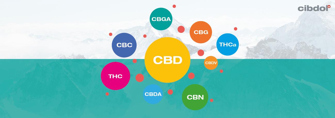 O que é o Óleo CBD de Espetro Integral?