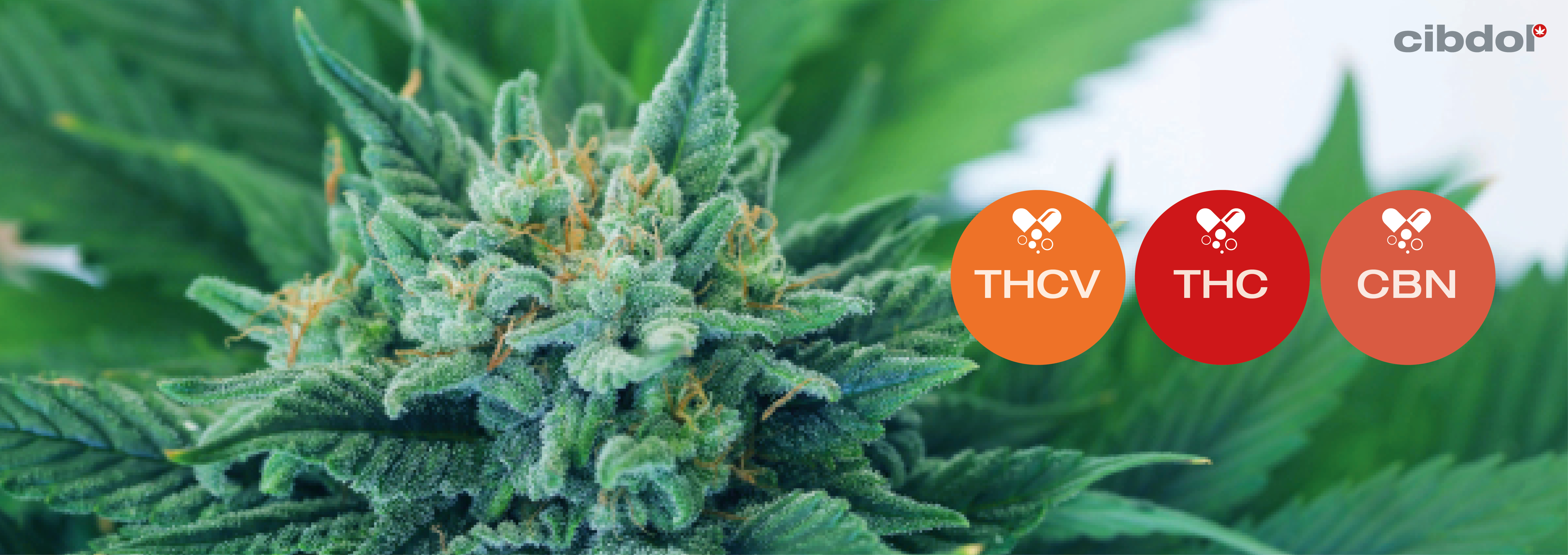 Which Cannabinoids Are Psychoactive?