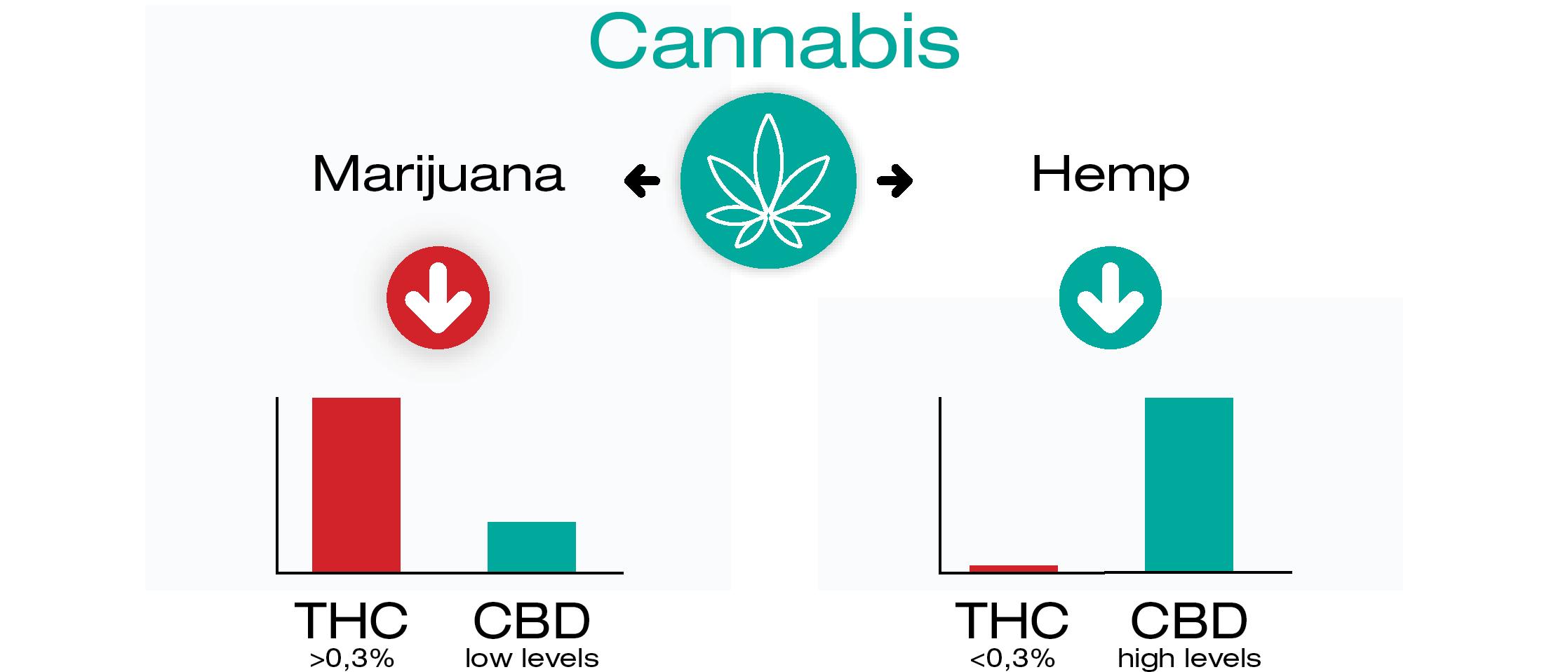 ¿De dónde salen el CBD y el THC?