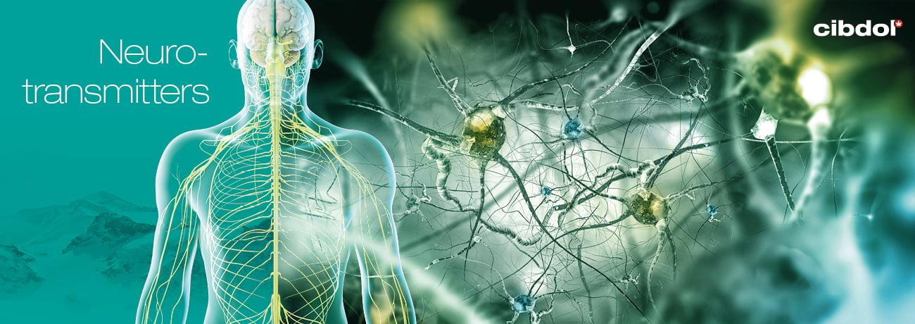 Vad är endocannabinoider?