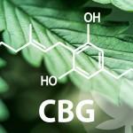 The Vast World Of Cannabinoids Starts With CBG
