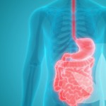 How Might CBD Help With Gut Health And Digestion?
